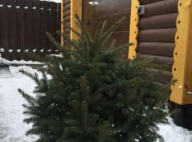 Инструкция по уходу за живой новогодней в горшке.