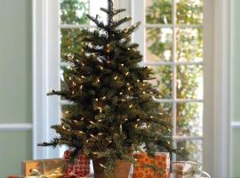 Как ухаживать за срезанной новогодней елью?