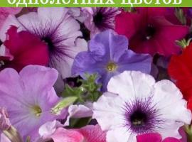 На всю рассаду однолетних цветов скидка 20%